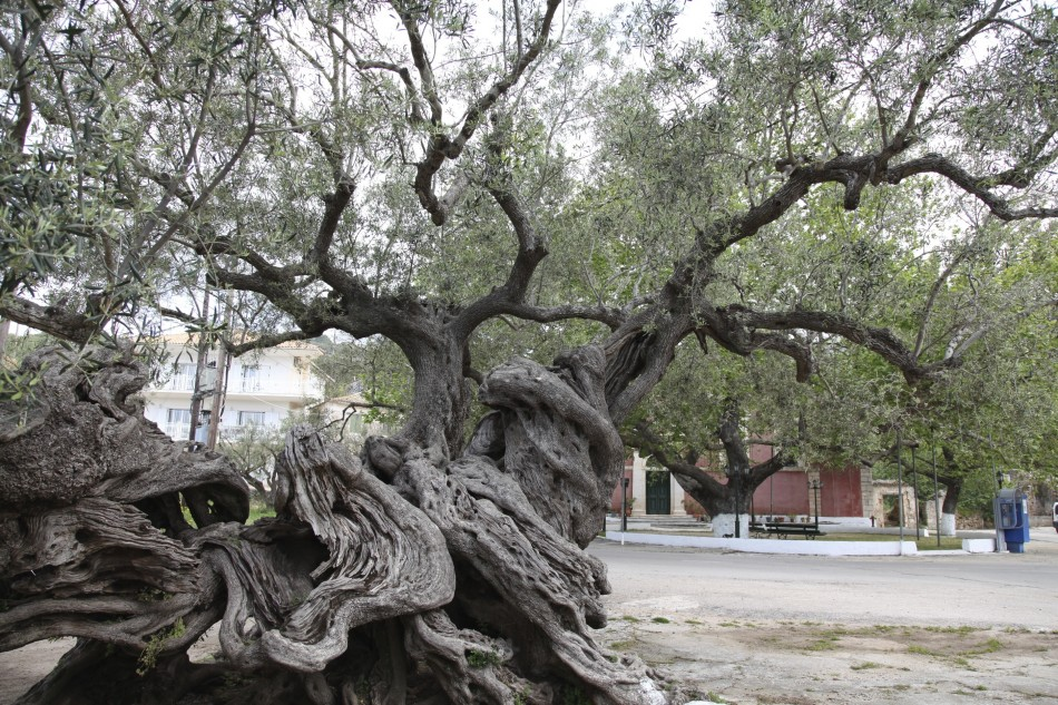 Olivenöl aus Zakynthos